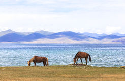 HORSES AT SONG KUL LAKE IN KYRGYZSTAN. This photo was taken on July, 2015 in Songkul lake, Kyrgyzstan. Song Kul is a high alpine lake in the Tian Shan Mountains stock photo