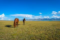 Horses by Song Kul lake. Mare and young horse standing in scenic landscape around Song Kul lake, Kyrgyzstan Stock Images