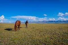 Horses by Song Kul lake. Mare and young horse standing in scenic landscape around Song Kul lake, Kyrgyzstan Stock Photos