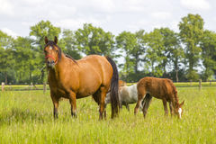 Horses on a spring pasture Stock Image
