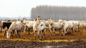 Horses in the spring sunshine on the field. Royalty Free Stock Photo