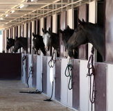 Horses in a stable. Horses standing in their stalls Stock Photography