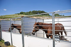 Horses in stable. Horses in the open-air stable on the polish countryside Royalty Free Stock Photography