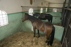 Horses in stable Royalty Free Stock Images