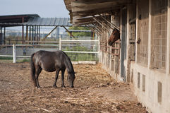 Horses in the stable Royalty Free Stock Image