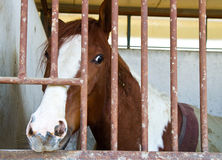 Horses in stable Stock Image