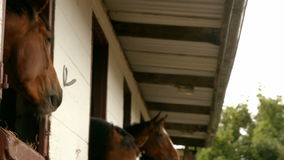 Horses in stable in the countryside stock video footage