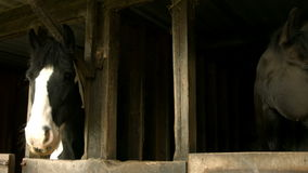 Horses in stable in the countryside stock footage
