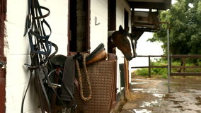 Horses in stable in the countryside stock video