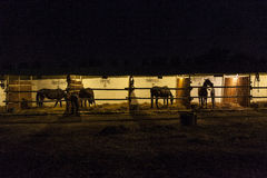 Horses in the stable at night Stock Photo