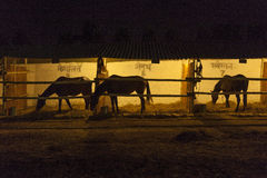 Horses in the stable at night Stock Photography
