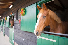 Horses in the stable Stock Image