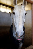 Horses in stable Stock Photos