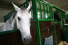 Horses in stable Stock Photo