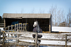 Horses in Stable - Winter Stock Image