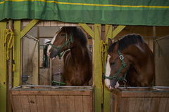 Horses in the stables Stock Image