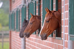Horses in the stall Royalty Free Stock Photos