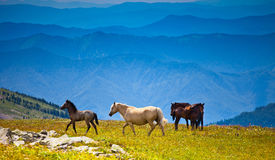 Several horses on mountain peak field Royalty Free Stock Photos