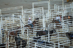 Horses in stalls, Calgary Stampede Royalty Free Stock Photos