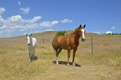Horses stand in a fenced in corral Stock Images