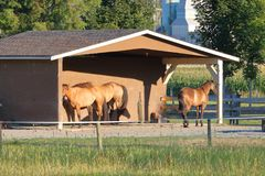 Enclosure for Horses. Horses stand in a small and simple wooden enclosure that provides shelter during the rainy and cold seasons stock photo