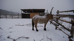 Horses stand in the snow. stock video