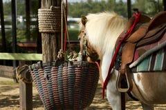 Horses standing Stock Photos