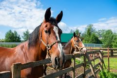 Horses standing along a fence Stock Photo