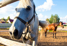 Horses standing in aviary close up Royalty Free Stock Image