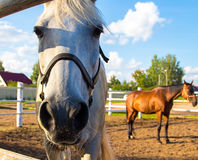 Horses standing in aviary Stock Photography