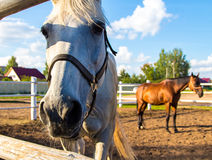Horses standing in corral Stock Image