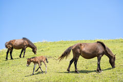Horses standing Stock Image