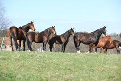 Horses standing in the line Royalty Free Stock Images