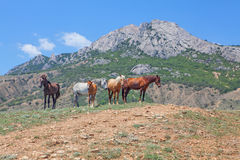 Horses standing near grey mountain Royalty Free Stock Photo