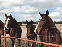 Horses standing next to a fence