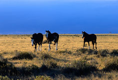 Horses in the steppe Royalty Free Stock Photos