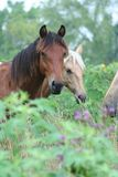 Horses stood in countryside. Meadow with long grass and flowers in foreground royalty free stock image