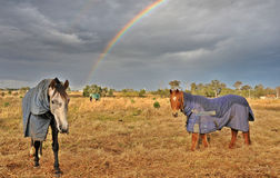 Horses in a storm Stock Photo
