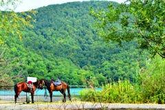 Horses. Sudden photo horses standing head to head Royalty Free Stock Photos