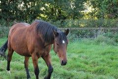Horses Suffolk Autumn Stock Photo