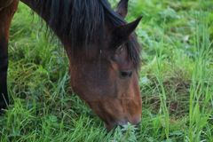 Horses Suffolk Autumn Royalty Free Stock Images
