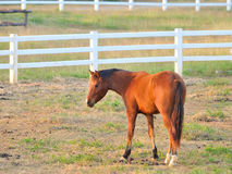 Horses on a summe Royalty Free Stock Image