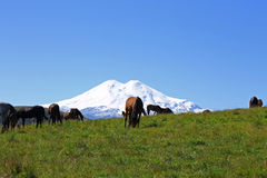 Horses on the summer autumn caucasus meadow Royalty Free Stock Photo