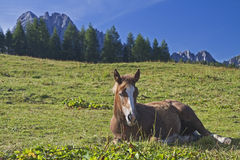 Horses summer in the mountains Royalty Free Stock Images