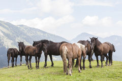 Horses summer in the mountains Stock Photo