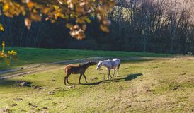 Horses in summertime near a forest talking Stock Image