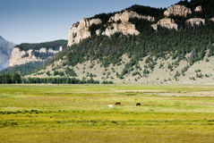 Horses in Sunlight Basin. Horses among the mountains and valleys in Sunlight Basin Stock Photo