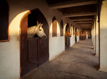 Horses in a Sunlit Stable Extending Their Necks Out of the Window Royalty Free Stock Image