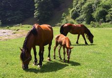 Horses on a sunny day. In the field Stock Photography