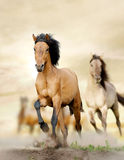Horses in sunset Stock Photography